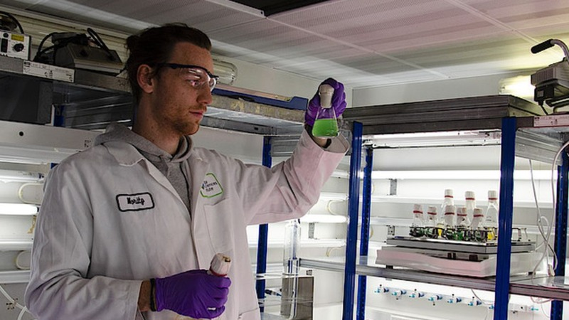 """Lebendes"" Plastik aus Cyanobakterien"