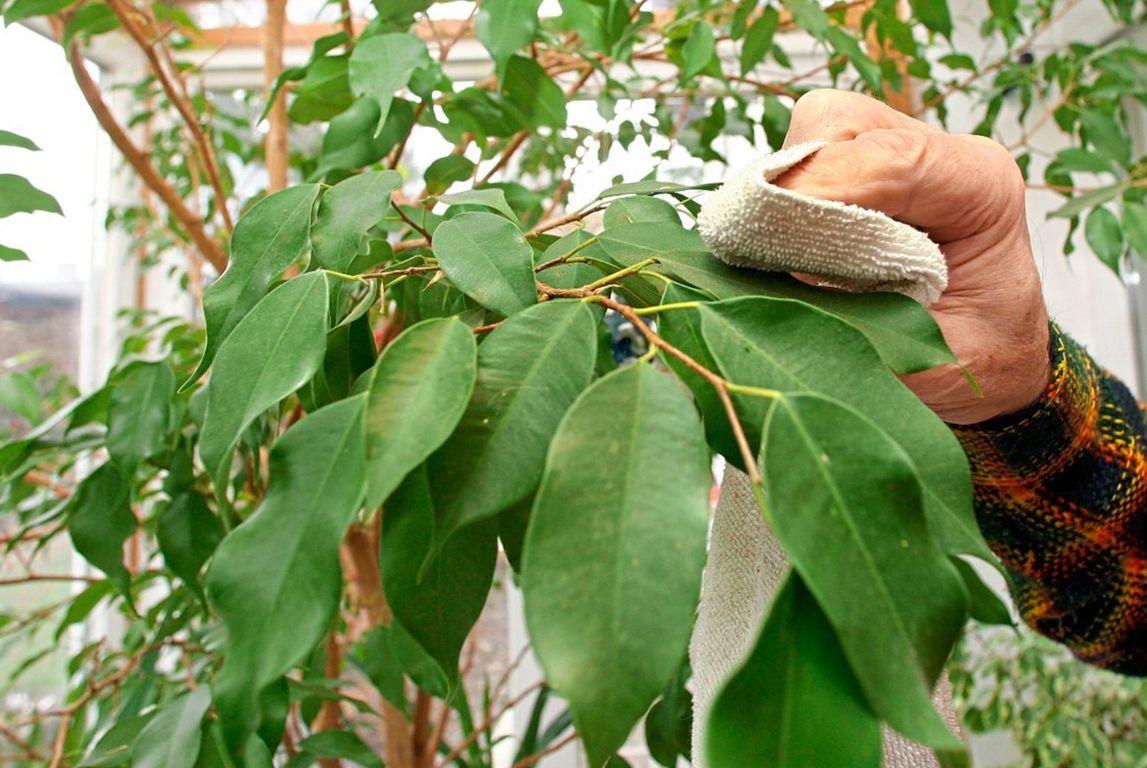 Zimmerpflanzen könnten die Gesundheit fördern