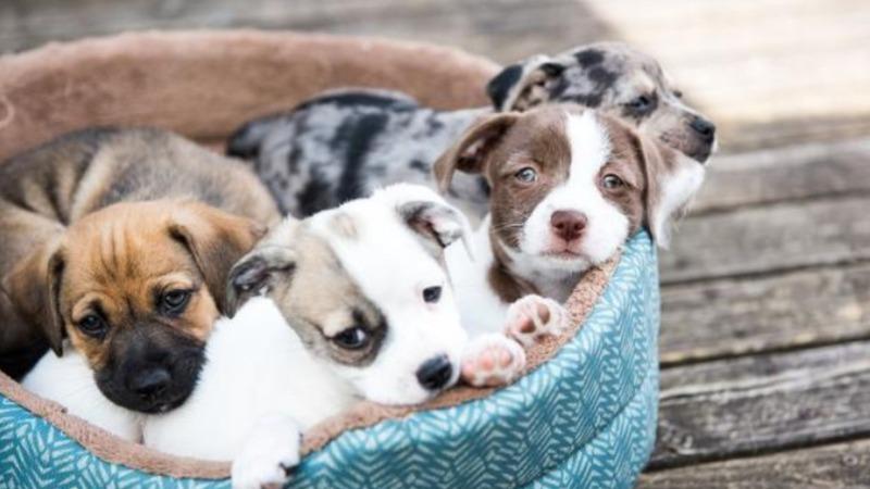 Frankreich will Online-Tierkauf verbieten
