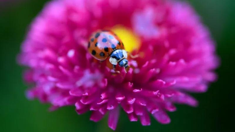 Insekten sollen nun mehr Schutz genießen