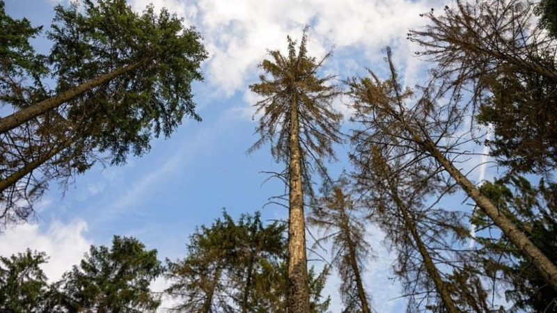 Kranker Wald soll nachhaltig genesen