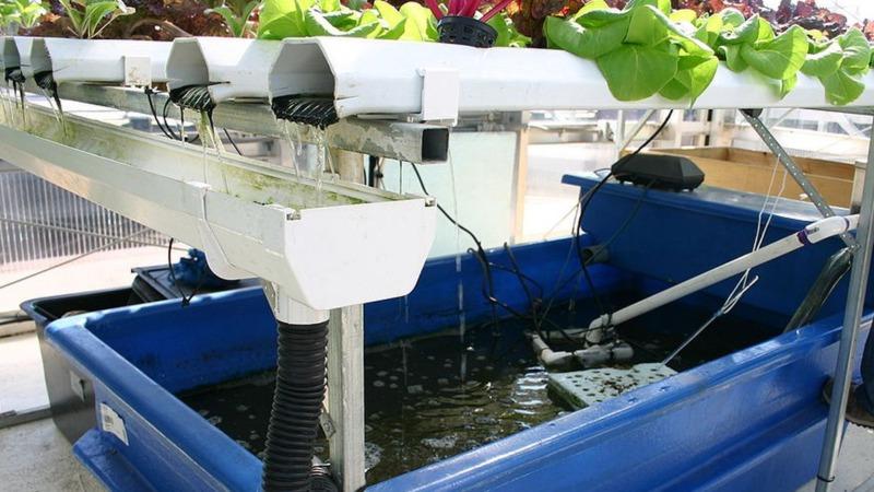 Aquaponik ohne Mikroplastik