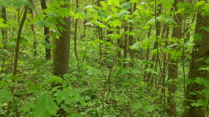 Klimawandel gefährdet den europäischen Wald