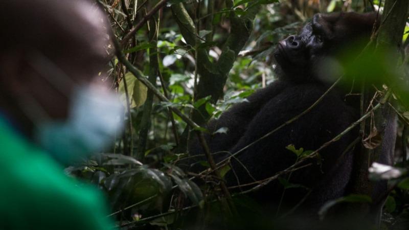 Entscheidungsträger nehmen Naturschutz nicht wichtig