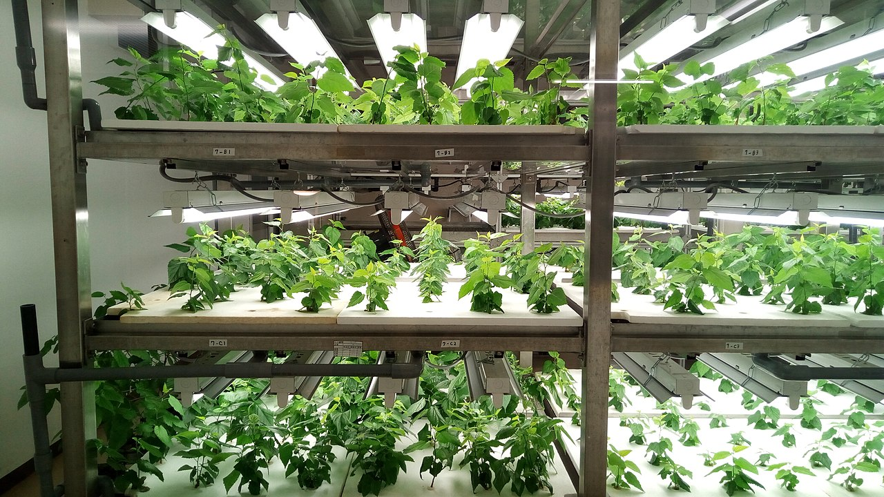 Wenn der Salat im Supermarktregal wächst