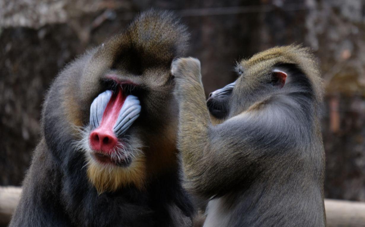 Pandemie-Schutz: Wie Tiere mit Krankheit umgehen