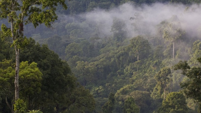 NABU und BMZ: Kompetenzpartnerschaft Natur