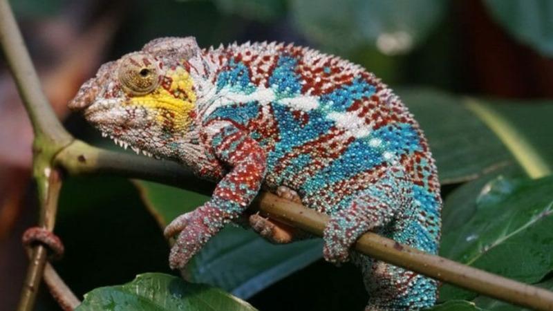Handel mit Wildtieren bedroht Artenvielfalt