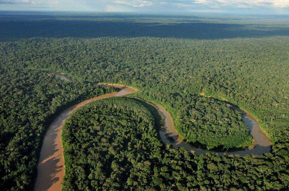 Regenwald Wolter Silvera Rainforest Foundation Norway