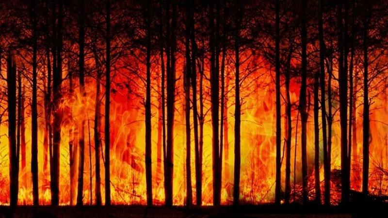 IPCC-Bericht: Zunehmend Hitzewellen und Waldbrände