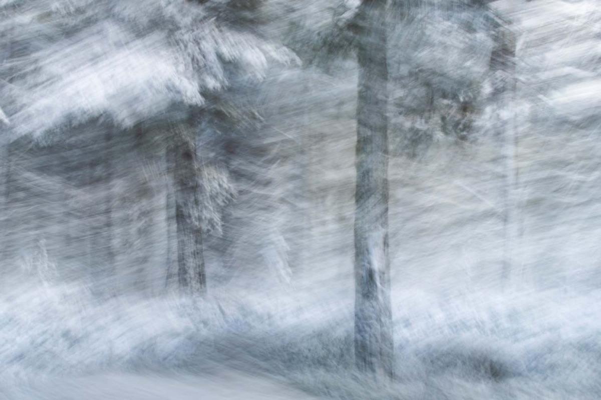 K6 2 jan lessmann winterwald