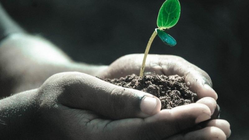 Mehraufnahme von Kohlendioxid durch Pflanzen am Limit