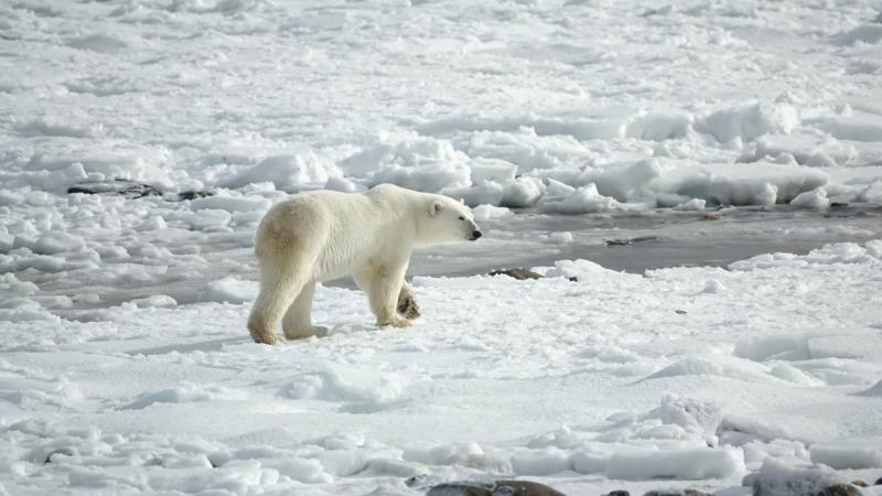 EU sucht eine Strategie für die Arktis
