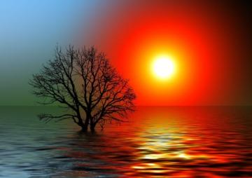 sonne baum wasser sun Gerd Altmann pixabay
