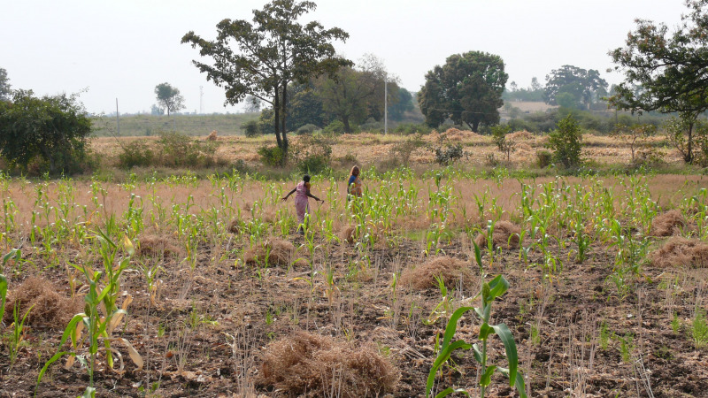 Savannenentstehung durch den Monsun