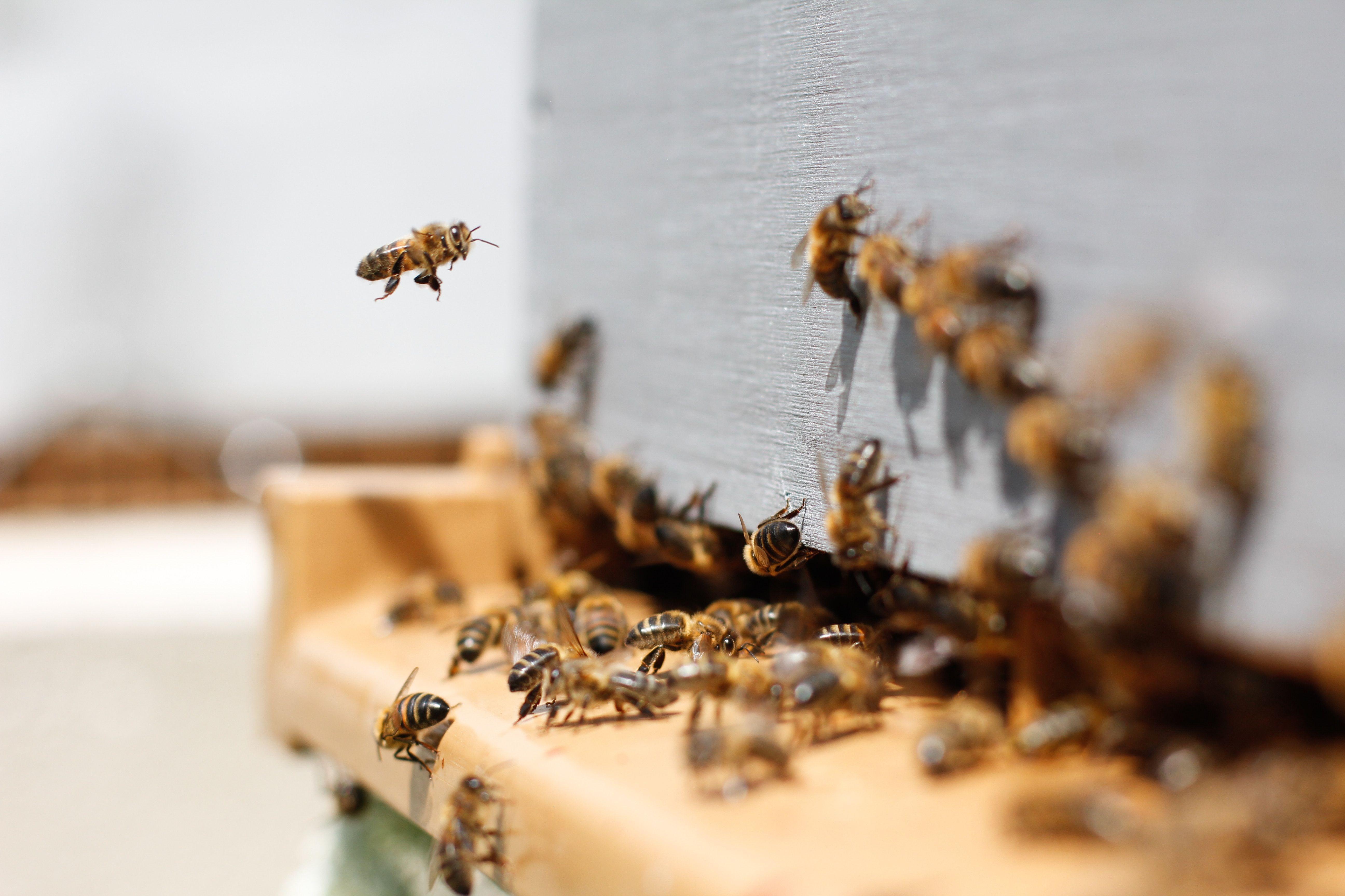 Hochgiftige Pestizide breiten sich in Bayern aus