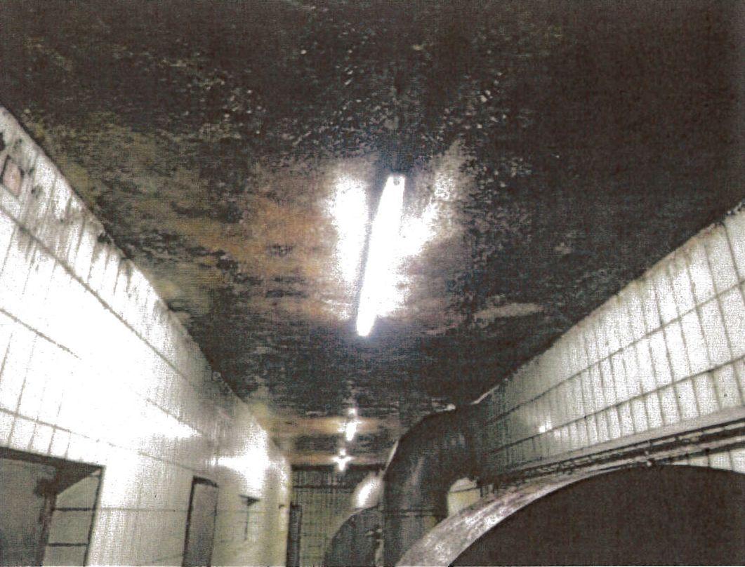 Schwere Hygienemängel in bayerischer Malzfabrik verheimlicht