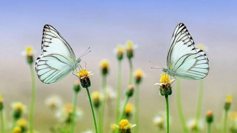 Insekten: Weniger Pestizide und mehr Lebensraum