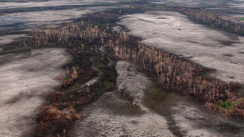 Mehr Abholzung durch Straffreiheit