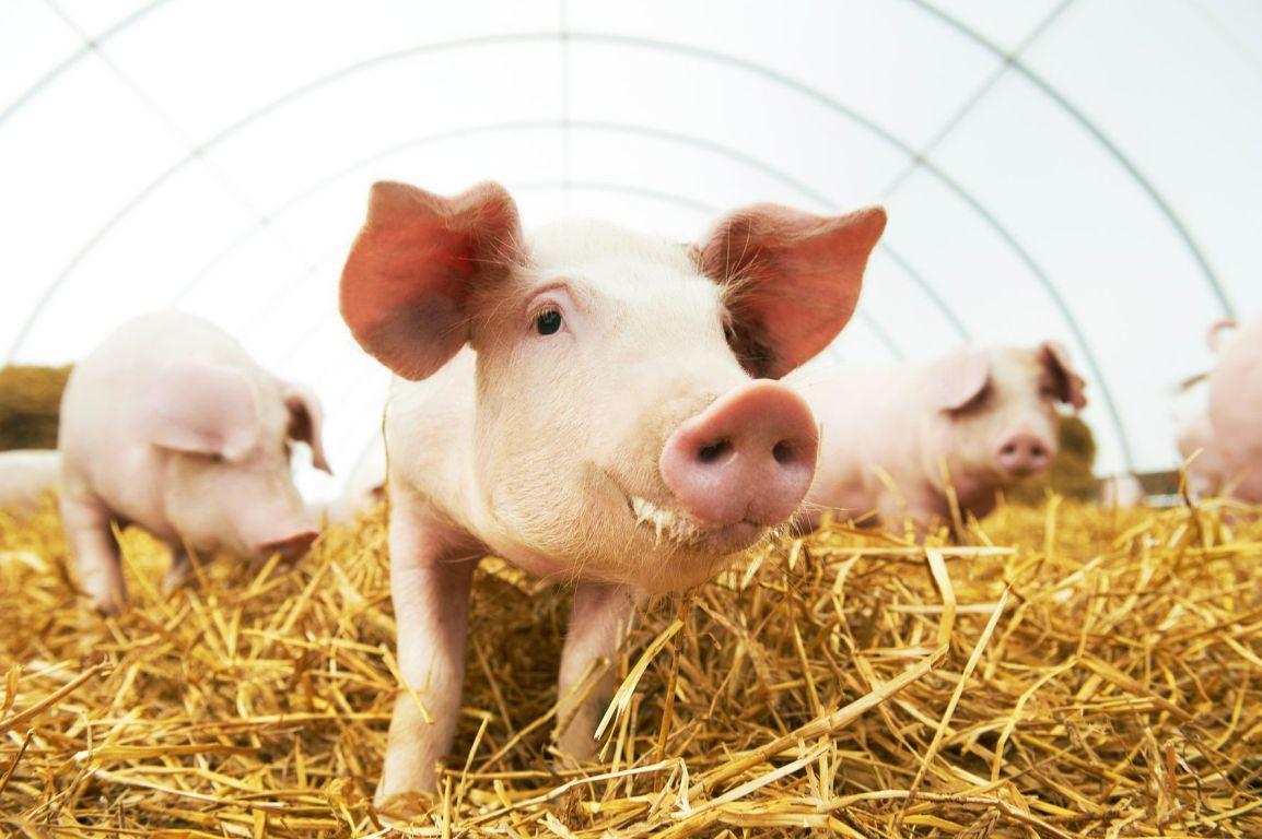 Nachhaltig füttern mit Co-Produkten