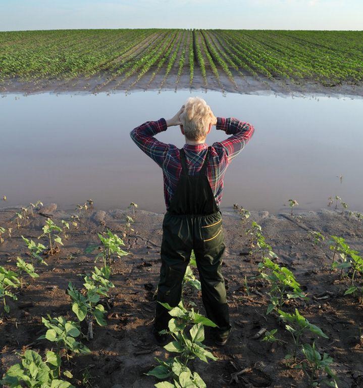 Extremwetter und Ernteausfälle: Drei Viertel sehen Zusammenhang