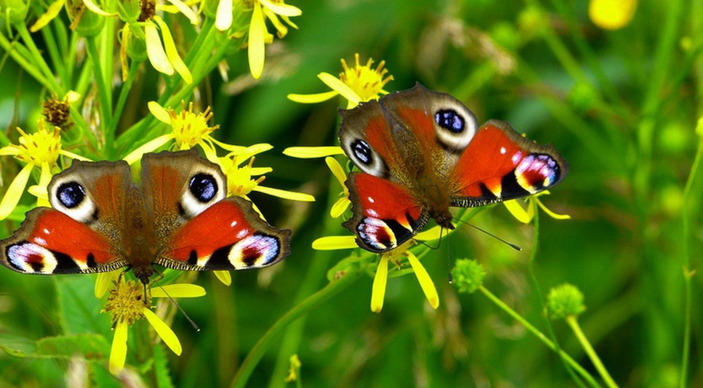 Leuchttürme: Mehr Insektenvielfalt in der Agrarlandschaft