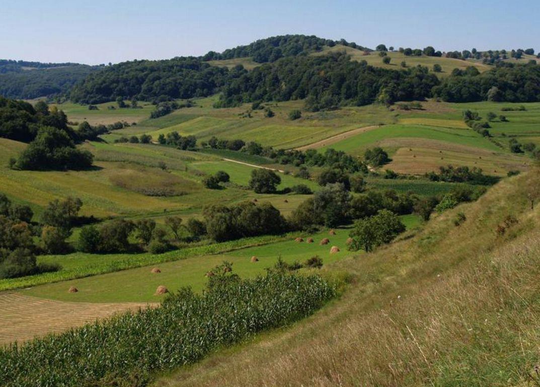 Biodiversitätsfreundliche Landschaften jenseits des Öko-Landbaus