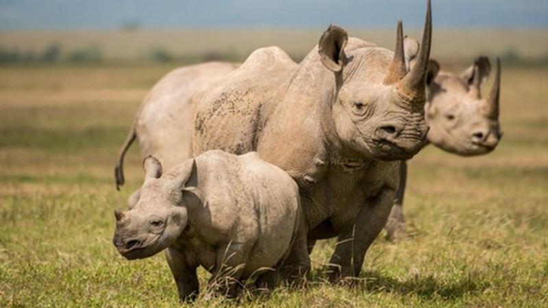 Gute Nachricht: 2020 kein Nashorn in Kenia gewildert