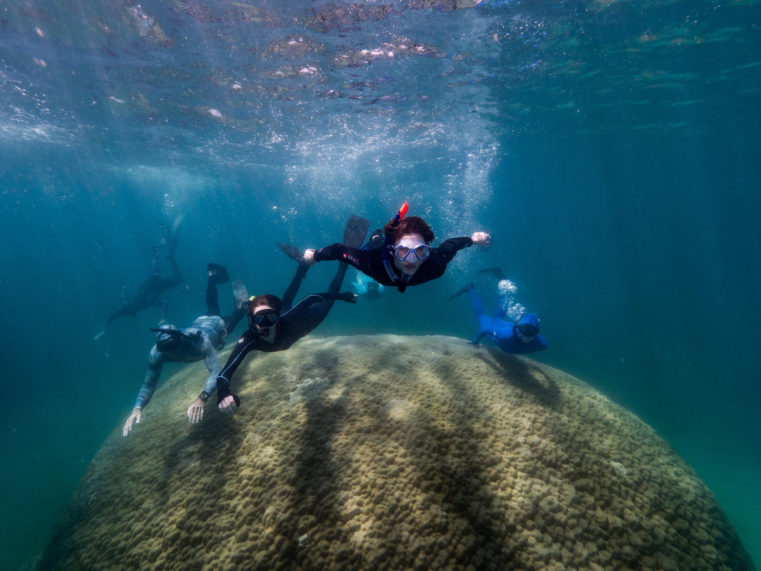Riesige Koralle im Great Barrier Reef entdeckt