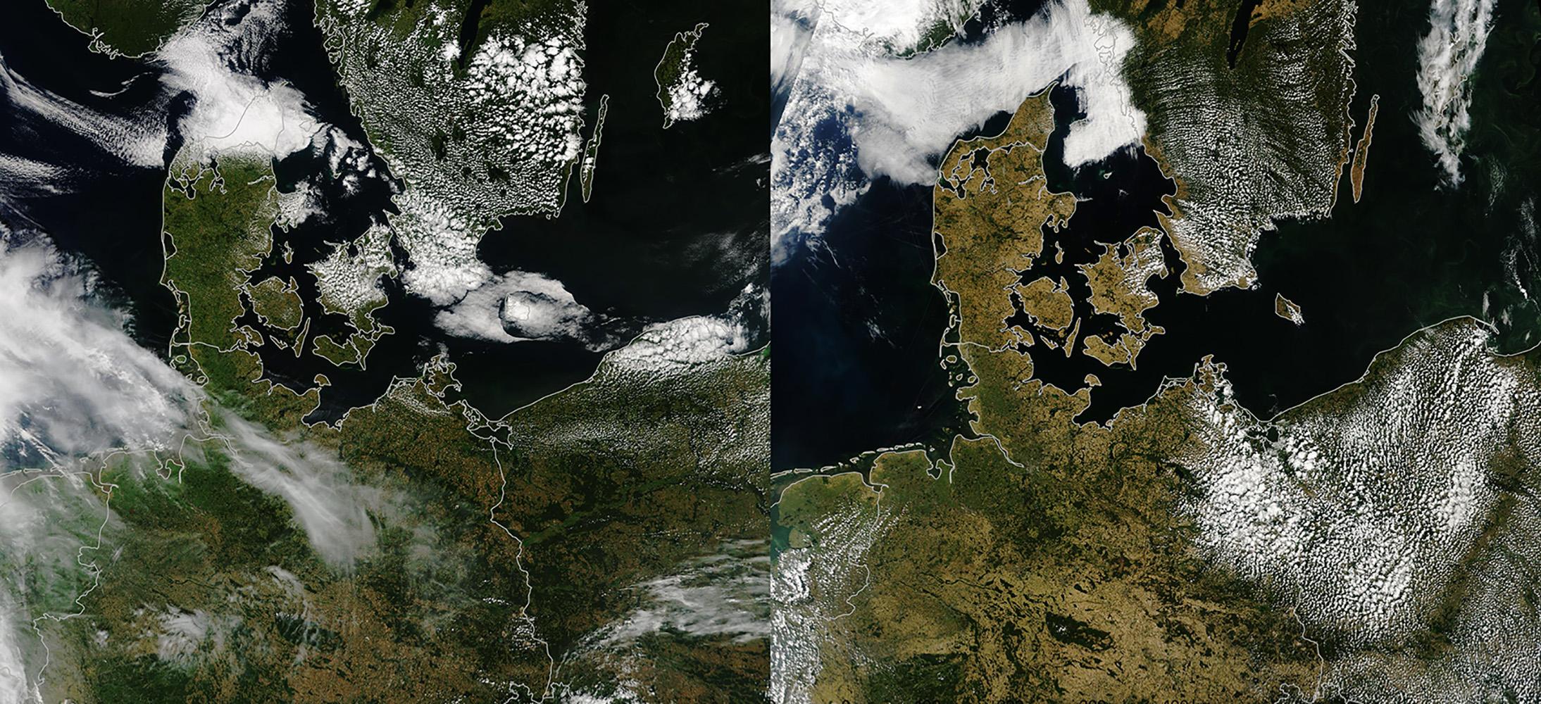 Wetterextreme beeinträchtigen globales Pflanzenwachstum