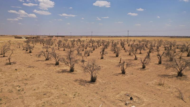 Klimakrise führt zur schlimmsten Dürre seit Jahrzehnten