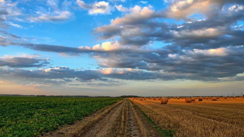 Carbon Farming: Mittel gegen den Klimawandel?