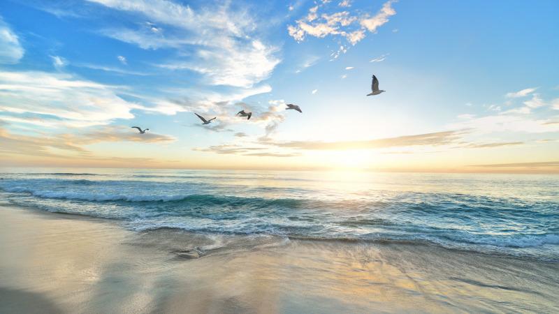 Ozeane: Ganze Nischen verschwinden