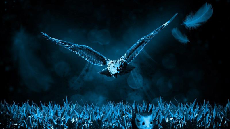 Jede dritte Raubvogelart im Bestand bedroht