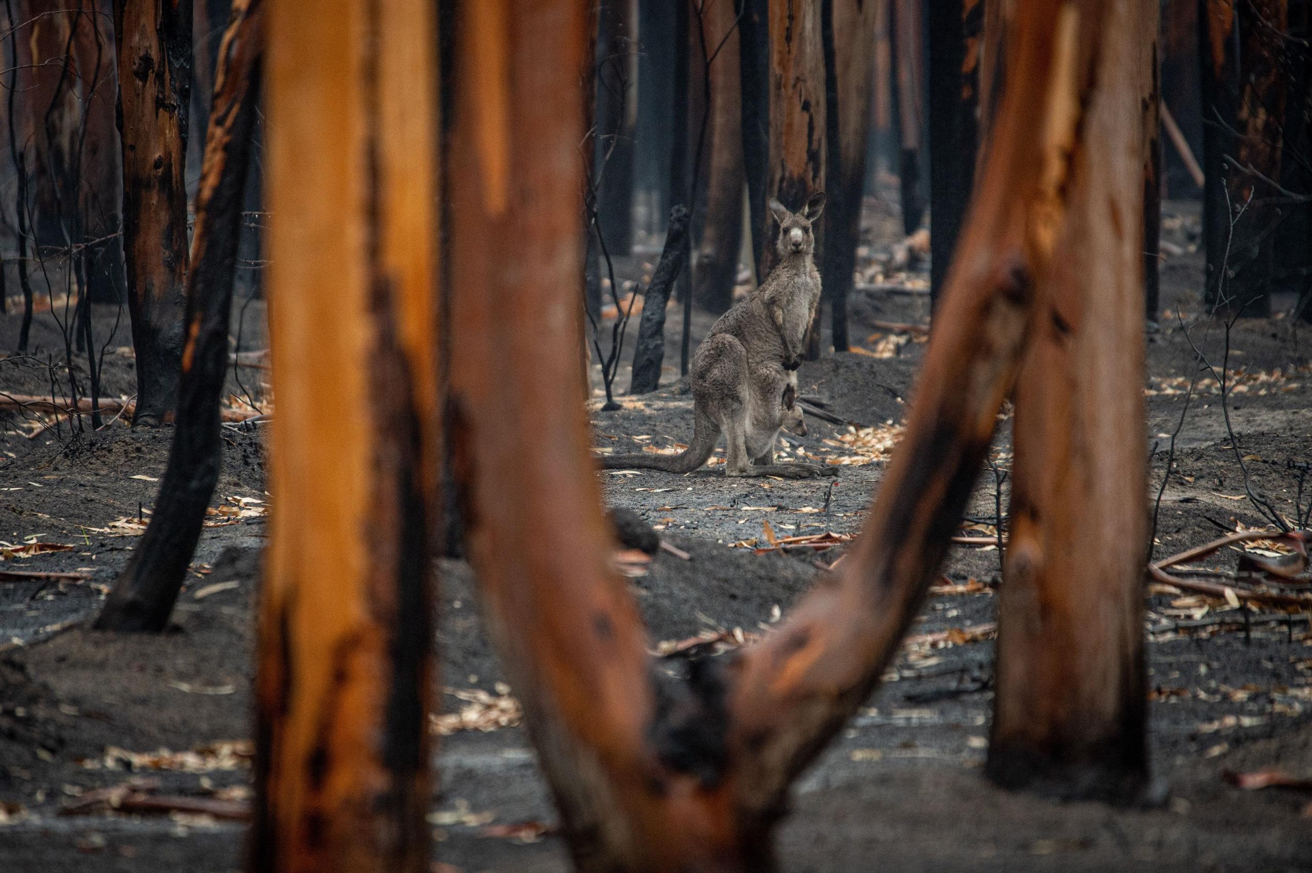 Die Klimakrise ist nicht akut genug zum handeln