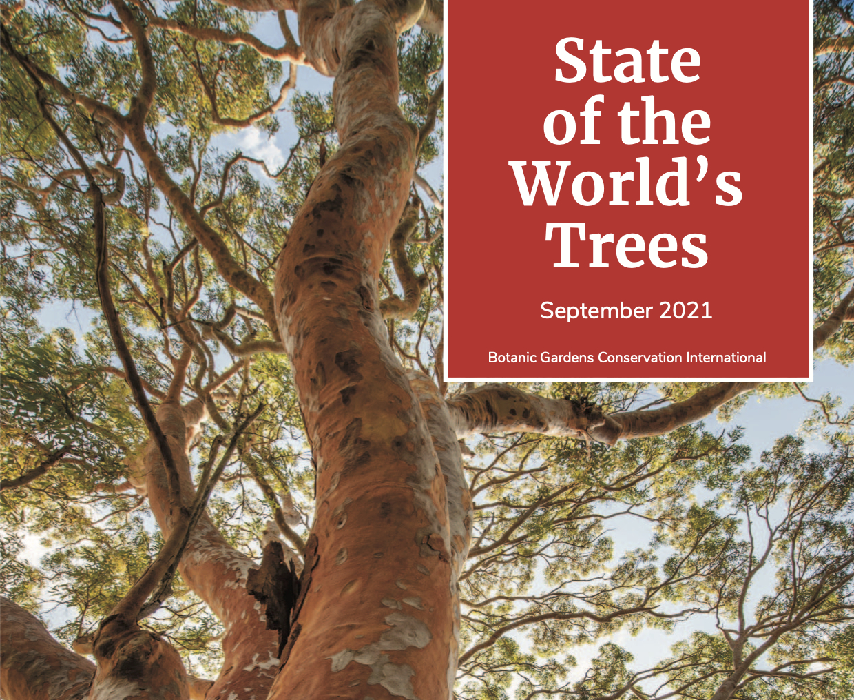 state of the worlds trees BCGI.org