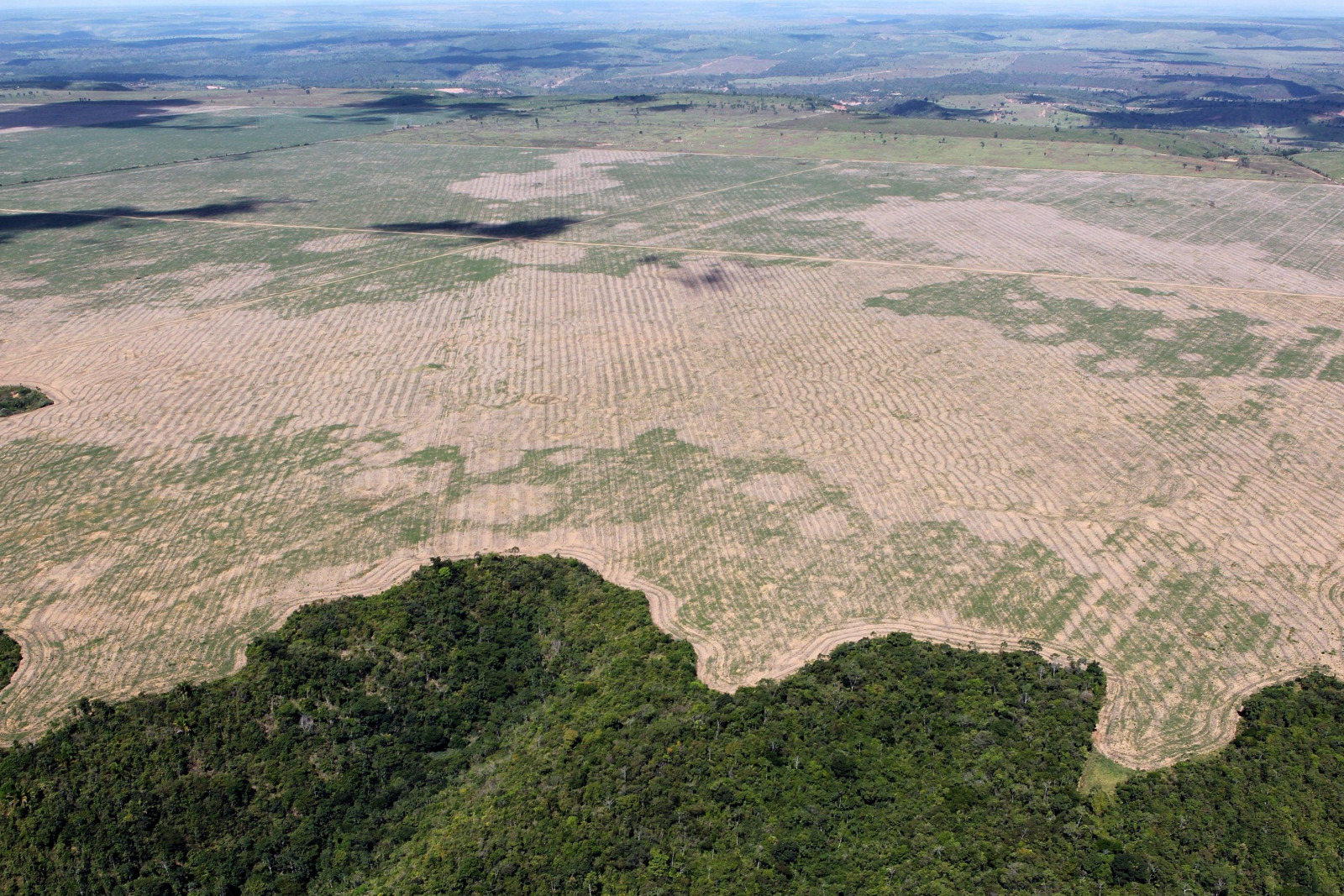 Waldrodung Deforestation