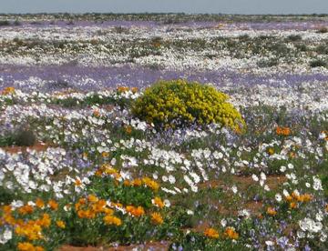 Blumenbestaeuber iDiv