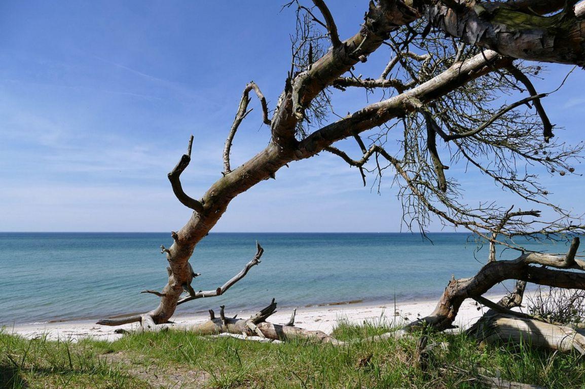 Artenreichtum an der Ostseeküste erhalten