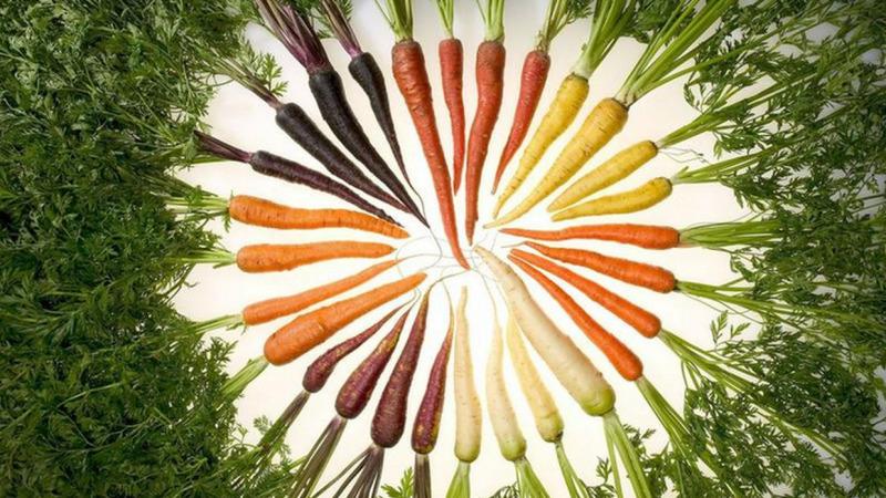 Forscherinnen plädieren für gemeingutbasiertes Saatgut