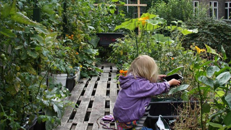 Urbane Gärten: Neue Wege der Lebensmittelversorgung finden